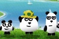 3 pandas au Brésil