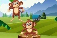 Tour de singes